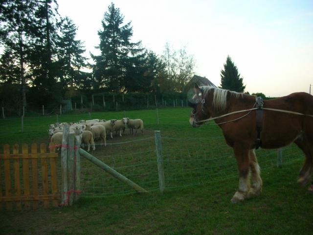 Nov 2011 Tilleul moutons.JPG
