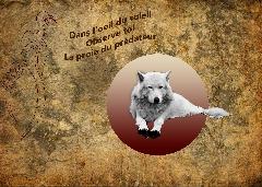 Album Animale - Image l