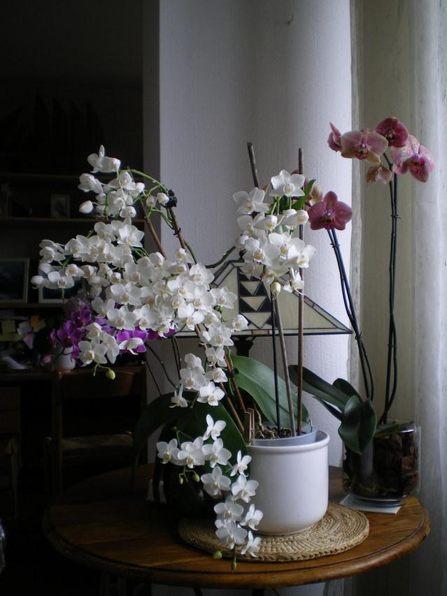 keiki sur fleurs ? - Page 2 17021810553320151714854573