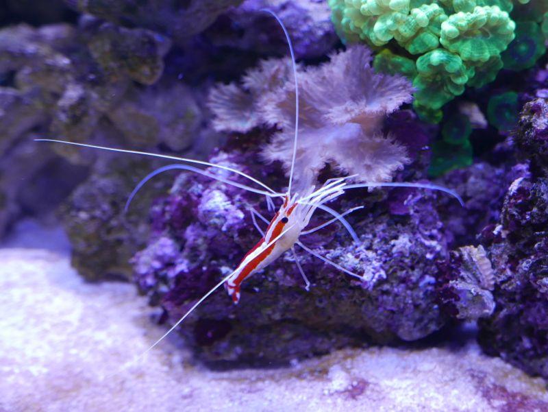 Aquarium 380 L total en système Jaubert déporté + ATS - Page 2 17022009144713025714863380