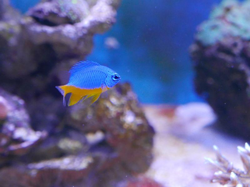 Aquarium 380 L total en système Jaubert déporté + ATS - Page 2 17022009144813025714863381