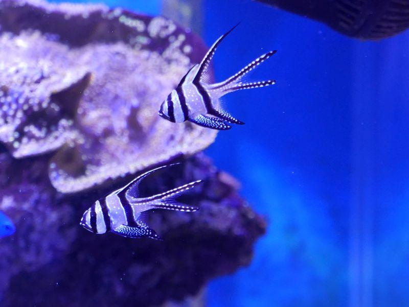 Aquarium 380 L total en système Jaubert déporté + ATS - Page 2 17022009144813025714863383