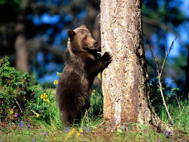 ours_arbre