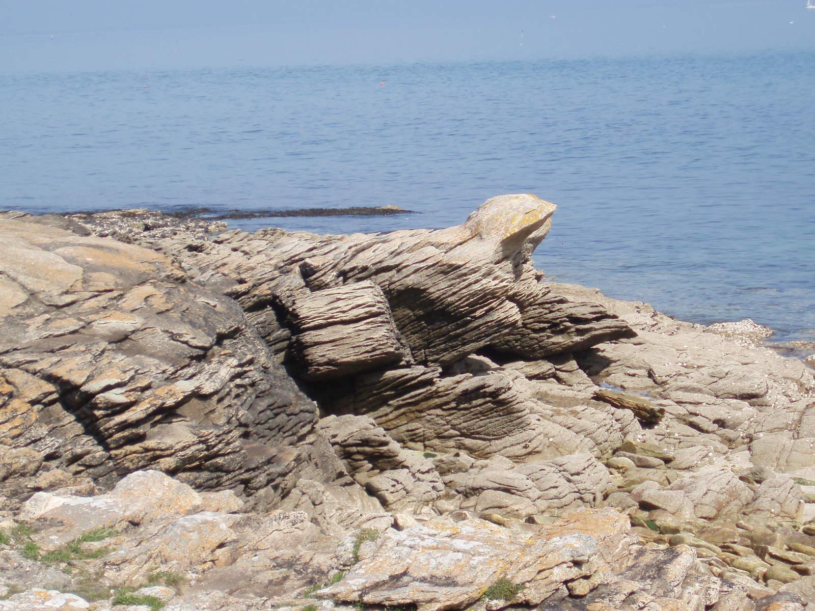 """Chien de mer """"fossilisé"""" !!! 17031411440616129914918923"""