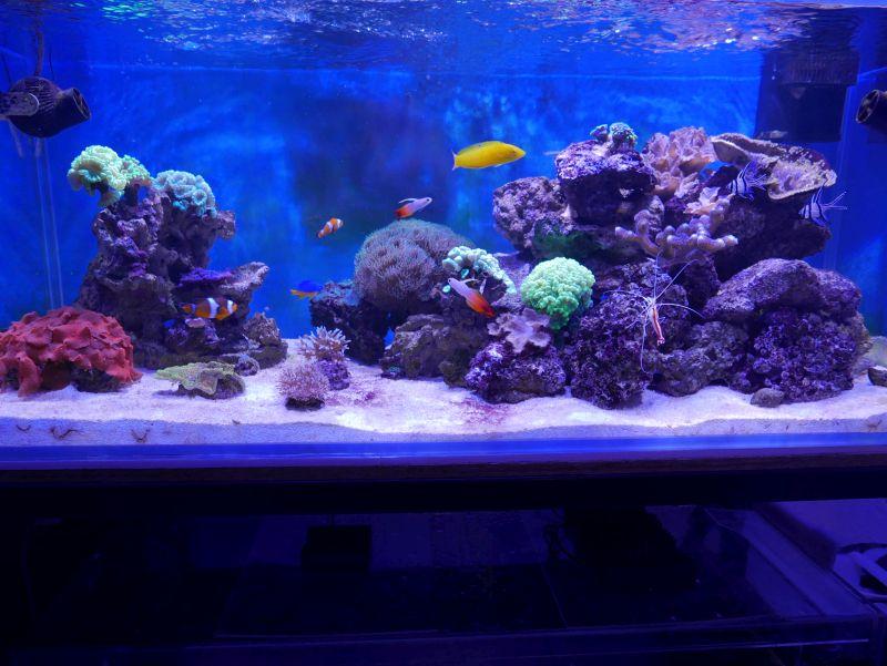 Aquarium 380 L total en système Jaubert déporté + ATS - Page 3 17032009394913025714934673