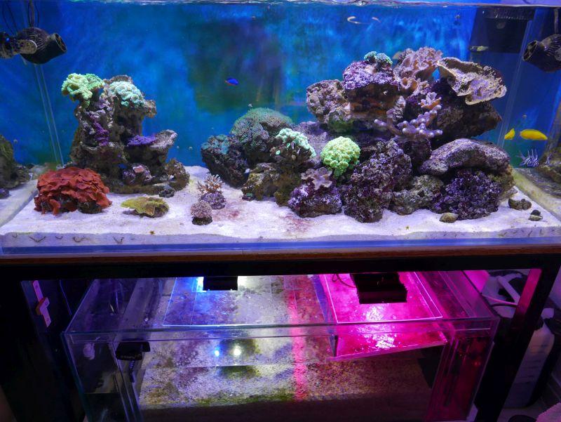Aquarium 380 L total en système Jaubert déporté + ATS - Page 3 17032009394913025714934674