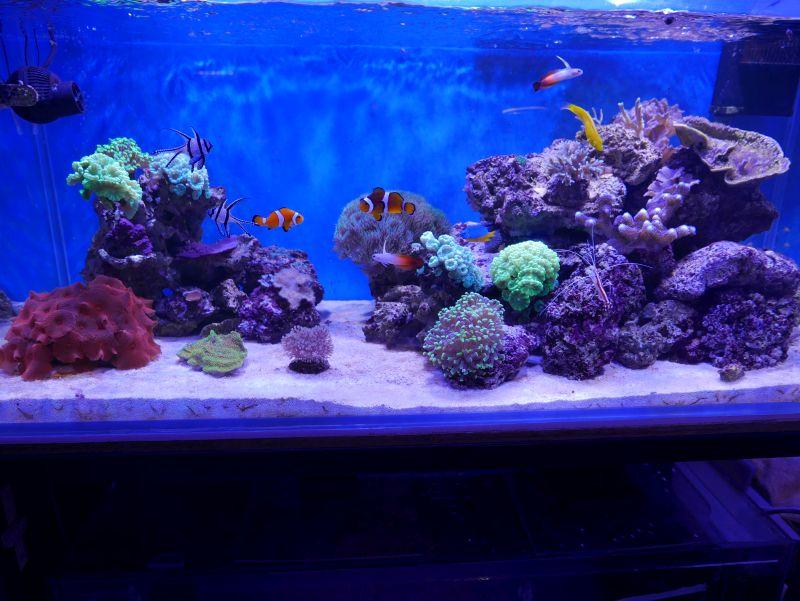 Aquarium 380 L total en système Jaubert déporté + ATS - Page 3 17050705203413025715024877
