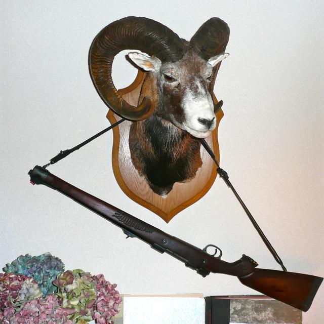 Les armes, les calibres , que choisir? 17052009282917333015051187