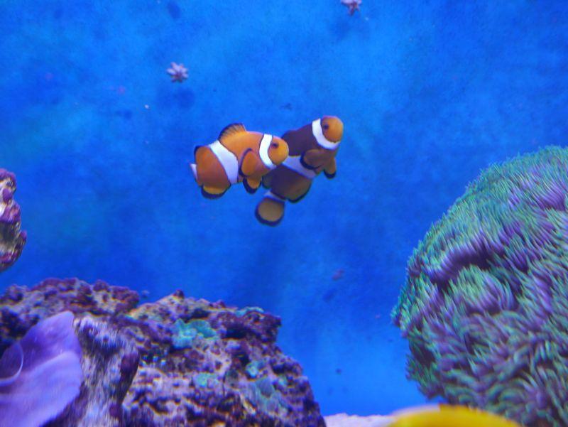 Aquarium 380 L total en système Jaubert déporté + ATS - Page 3 17052711201813025715062547