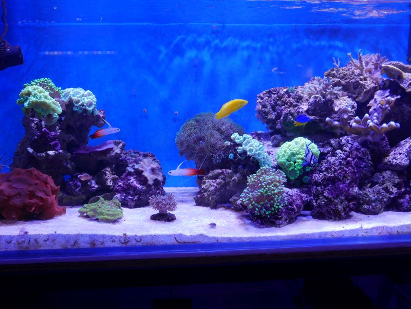 Aquarium 380 L total en système Jaubert déporté + ATS - Page 3 17052711201813025715062550