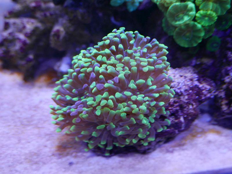 Aquarium 380 L total en système Jaubert déporté + ATS - Page 3 17052711201913025715062552