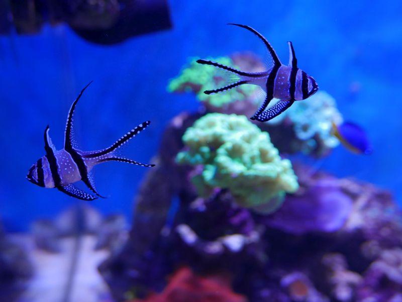 Aquarium 380 L total en système Jaubert déporté + ATS - Page 3 17052711202013025715062553