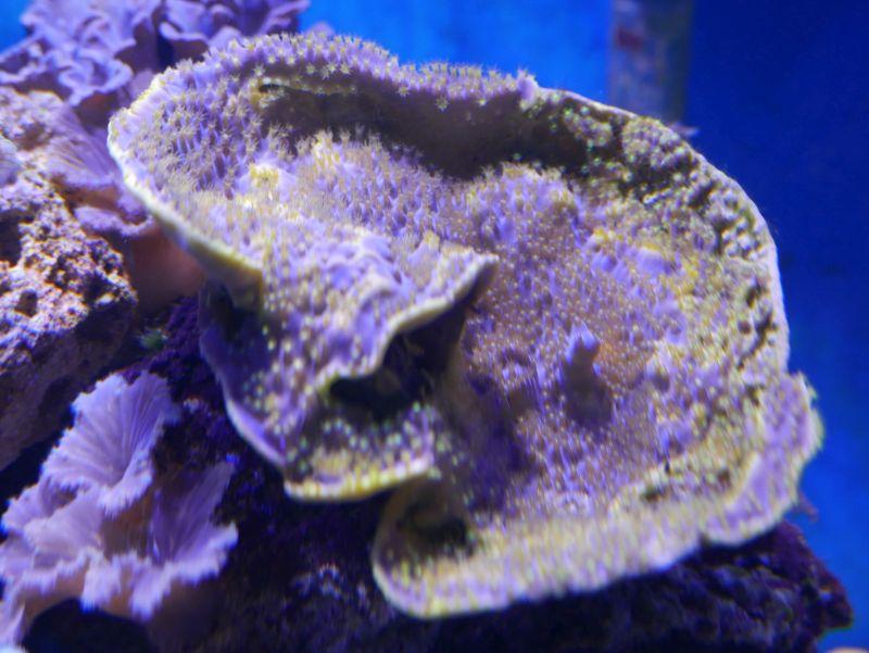 Aquarium 380 L total en système Jaubert déporté + ATS - Page 3 17052711202013025715062555