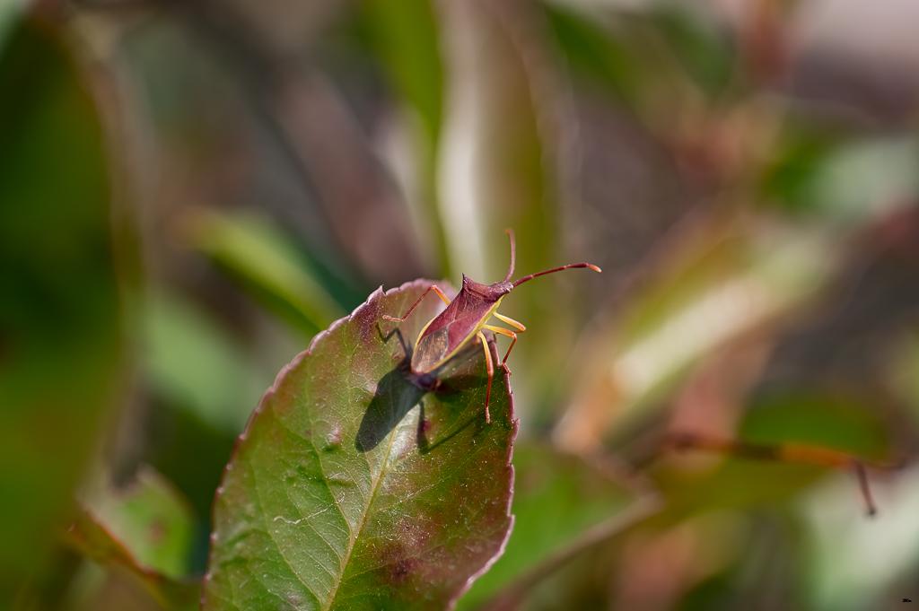 Macros/  proxi/  insectes  - Page 30 17062206123822554715107932