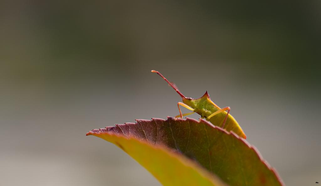 Macros/  proxi/  insectes  17062206124022554715107933