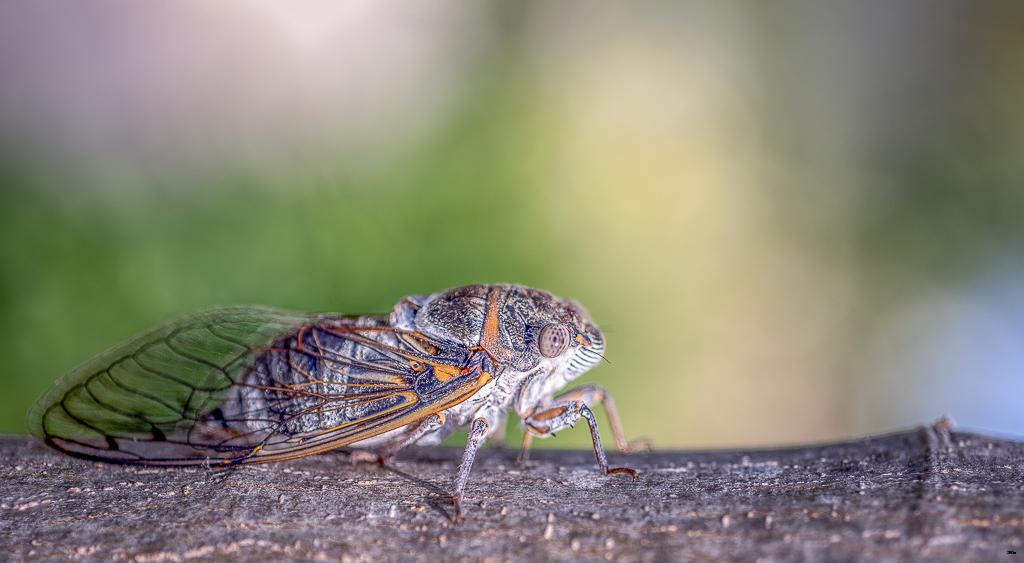 Macros/  proxi/  insectes  - Page 29 17062306322622554715109629