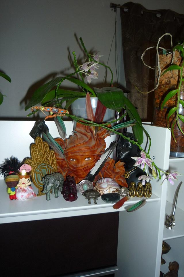 Phalaenopsis speciosa x hieroglyphica 17080108241517991315183775