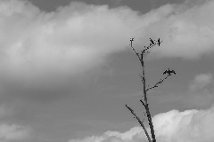 Album Oiseaux
