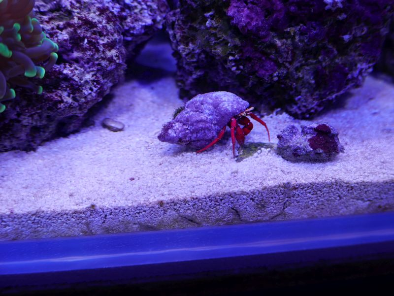 Aquarium 380 L total en système Jaubert déporté + ATS - Page 3 17082601205013025715240667