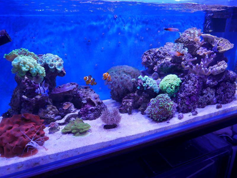 Aquarium 380 L total en système Jaubert déporté + ATS - Page 3 17082601205213025715240670
