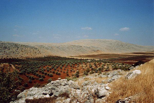 Champs d'oliviers et collines calcaires au nord-ouest d'Alep, Syrie,  1996 [Site : Images du monde  Réf : syrie_014 ]