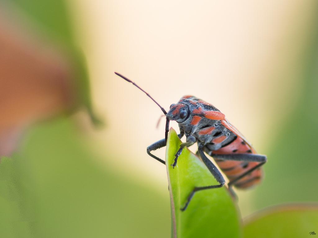 Macros/  proxi/  insectes  - Page 30 17092606485422554715288212