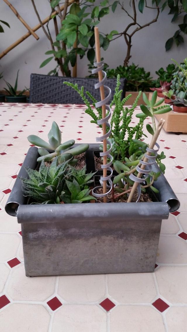 Les succulentes de Domy 17102606354919712015340700