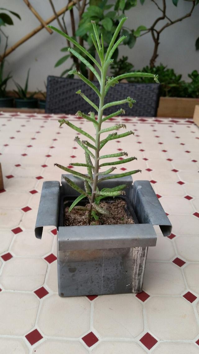 Les succulentes de Domy 17102606360119712015340705