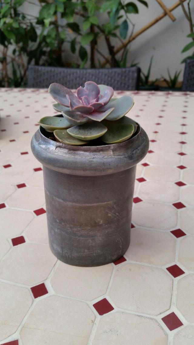 Les succulentes de Domy 17102606360419712015340706