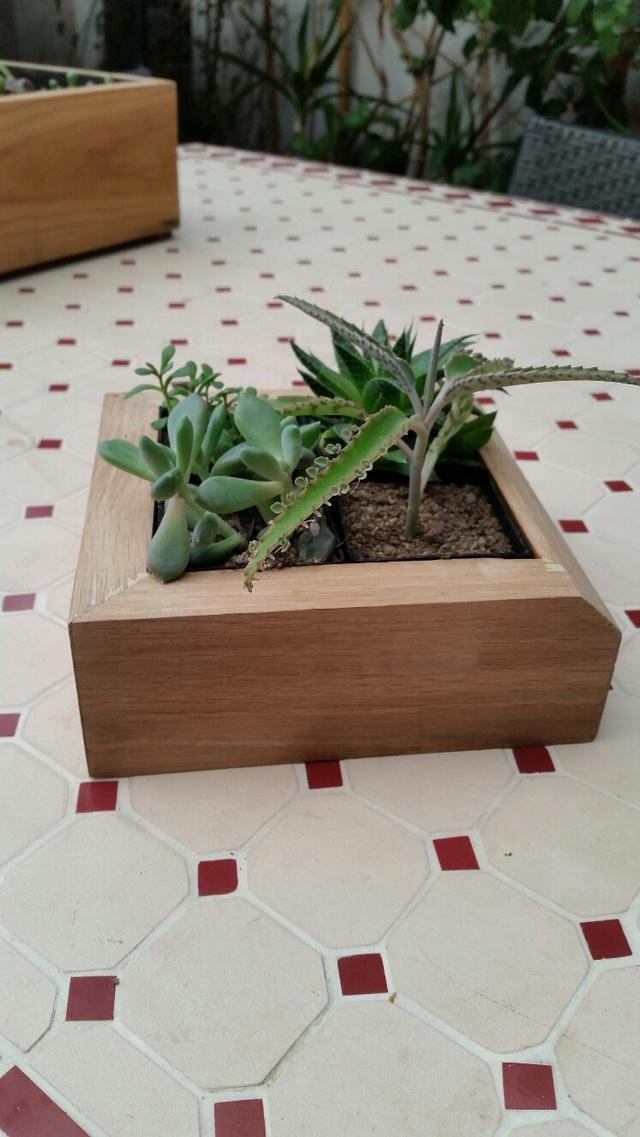 Les succulentes de Domy 17102606360819712015340707