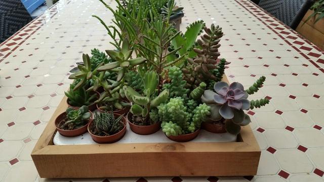 Les succulentes de Domy 17102606361019712015340708