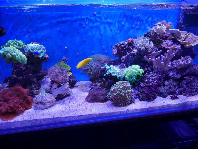 Aquarium 380 L total en système Jaubert déporté + ATS - Page 4 17110710215313025715358868