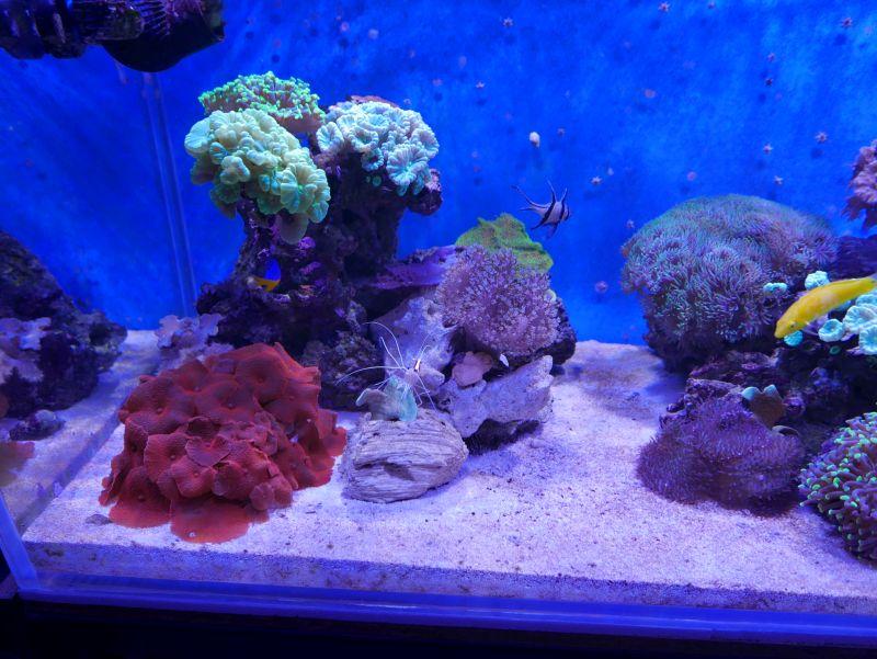 Aquarium 380 L total en système Jaubert déporté + ATS - Page 4 17110710215413025715358869