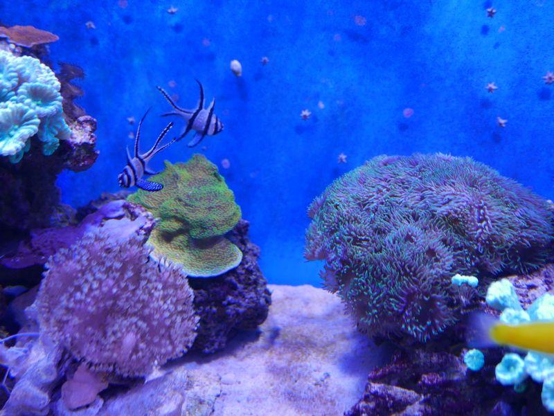 Aquarium 380 L total en système Jaubert déporté + ATS - Page 4 17110710215513025715358870
