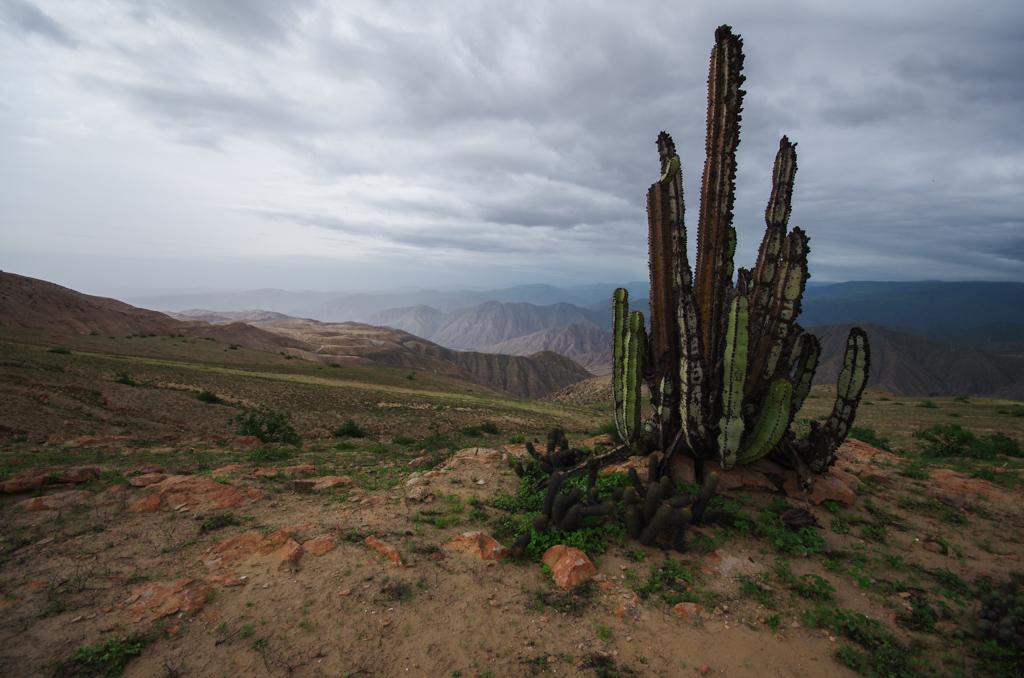 Pérou - De Paracas à Juliaca 17120409312412768015401721
