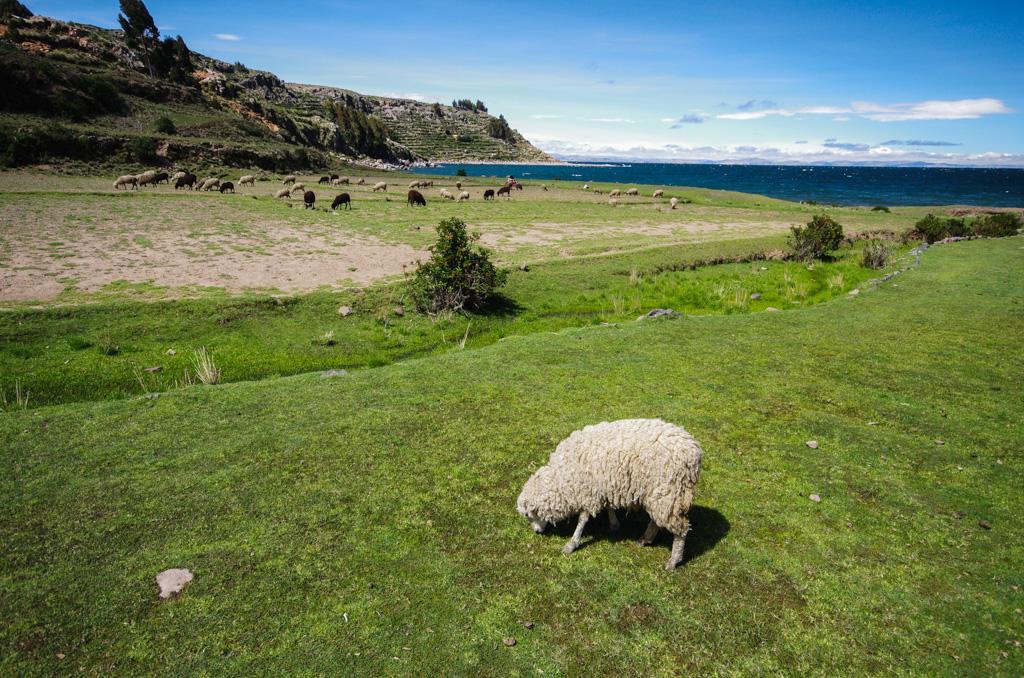 Pérou 2 - Puno, le lac Titicaca 17120507280112768015402968