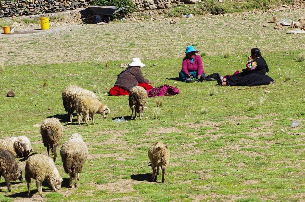 Pérou 2 - Puno, le lac Titicaca 17120507280612768015402969