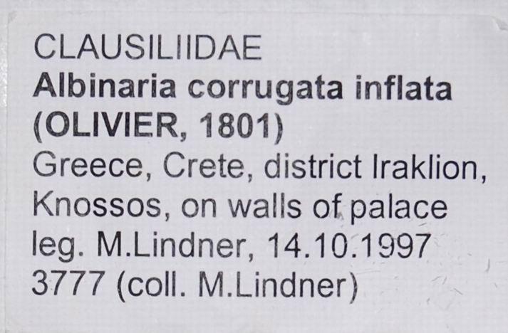 Albinaria corrugata inflata (Olivier, 1801) 18012007180814587715482315