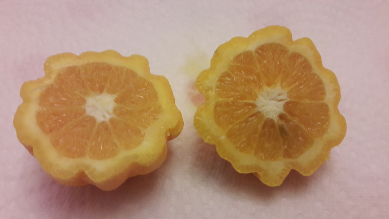 oranger quintella (1)