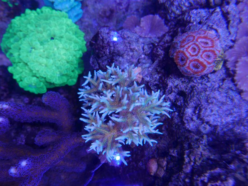 Aquarium 380 L total en système Jaubert déporté + ATS - Page 4 18020805334713025715544201