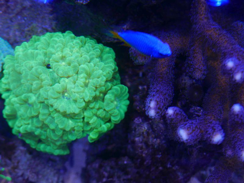 Aquarium 380 L total en système Jaubert déporté + ATS - Page 4 18020805334813025715544203