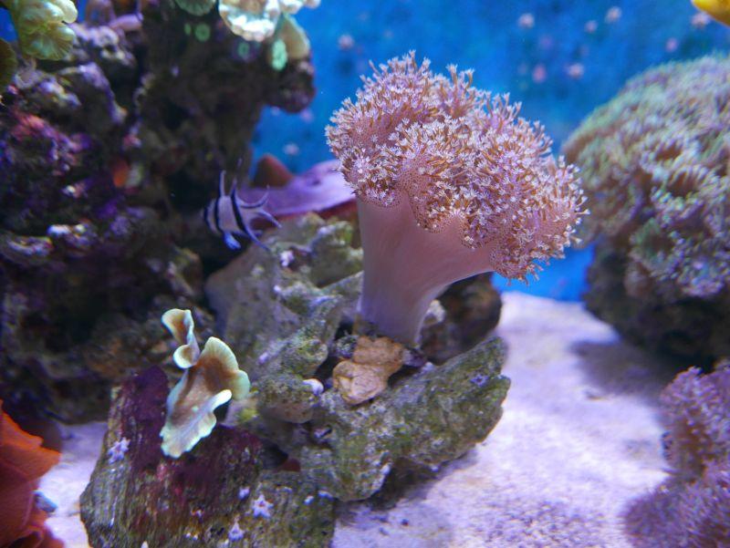 Aquarium 380 L total en système Jaubert déporté + ATS - Page 4 18021003220513025715548408