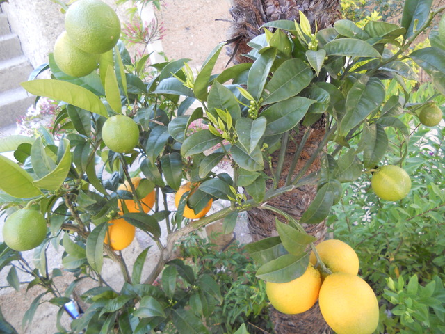 DSCN5289 oranges et boutons